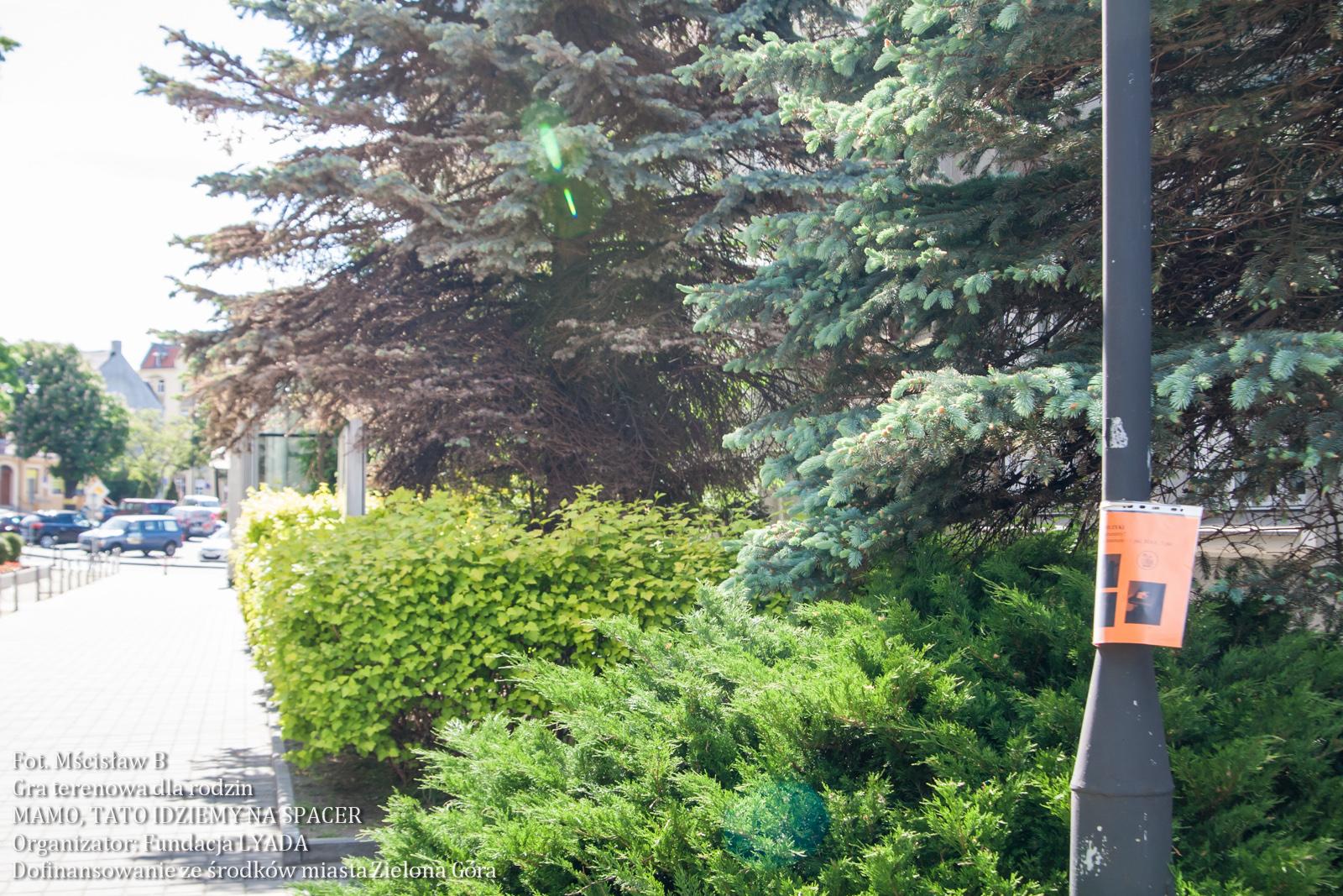 mamotatoidziemynaspacer-graterenowa-7624